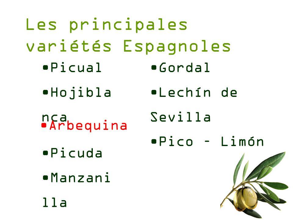 Les principales variétés Espagnoles Picual Hojibla nca Gordal Lechín de Sevilla Pico – Limón Arbequina Picuda Manzani lla