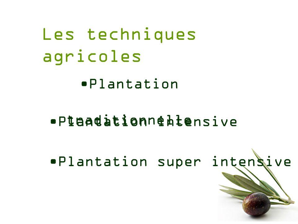 Les techniques agricoles Plantation traditionnelle Plantation super intensive Plantation intensive