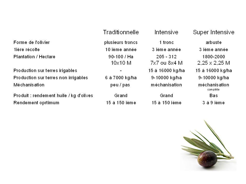 Classification Romaine OLEUM CIBARIUM – olives pas comestibles- alimentation des esclaves OLEUM EX ALBIS ULIBIS – olives vertes OLEUM VIRIDE – olives presque mûres OLEUM MATURUM – olives mûres OLEUM CADUCUM – olives tombées par terre