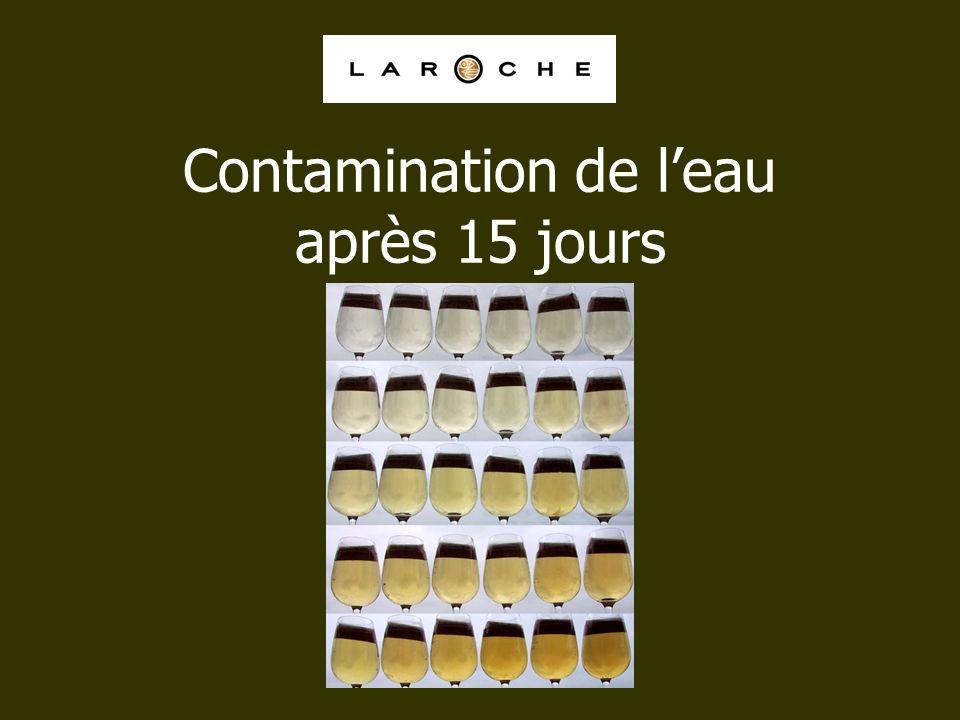 Contamination de leau après 15 jours