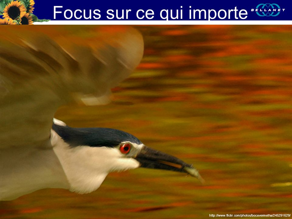 Focus sur ce qui importe http://www.flickr.com/photos/bocavermelha/245291629/