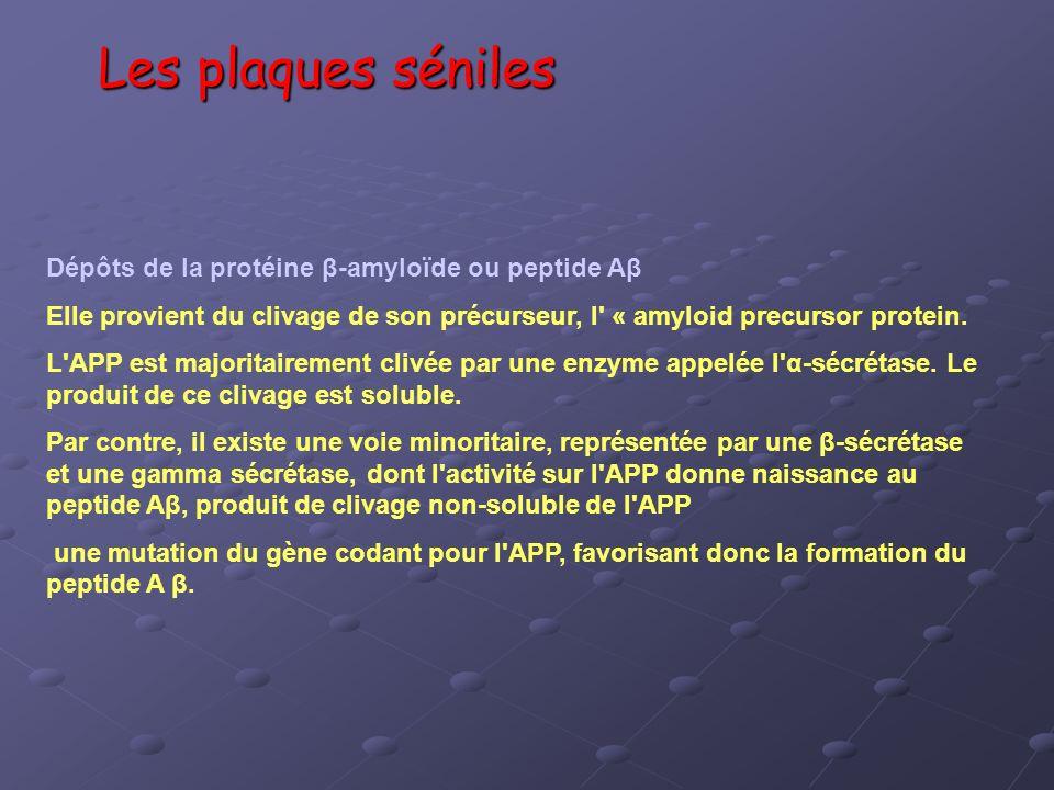 Les plaques séniles Dépôts de la protéine β-amyloïde ou peptide Aβ Elle provient du clivage de son précurseur, l' « amyloid precursor protein. L'APP e