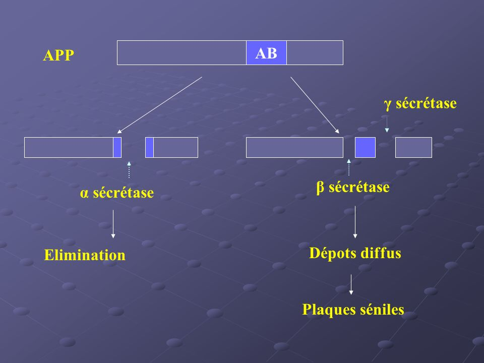 AB APP α sécrétase Elimination β sécrétase Dépots diffus Plaques séniles γ sécrétase