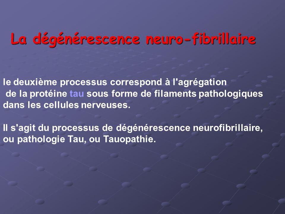 La dégénérescence neuro-fibrillaire le deuxième processus correspond à l'agrégation de la protéine tau sous forme de filaments pathologiques dans les
