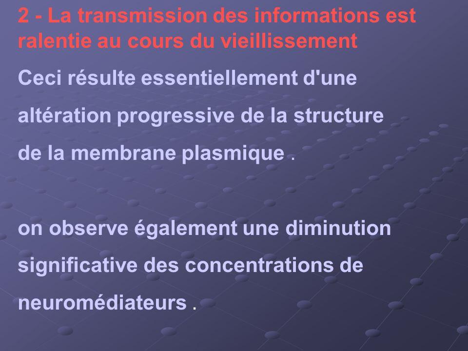 2 - La transmission des informations est ralentie au cours du vieillissement Ceci résulte essentiellement d'une altération progressive de la structure