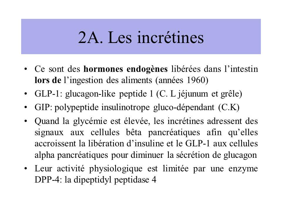 2A. Les incrétines Ce sont des hormones endogènes libérées dans lintestin lors de lingestion des aliments (années 1960) GLP-1: glucagon-like peptide 1
