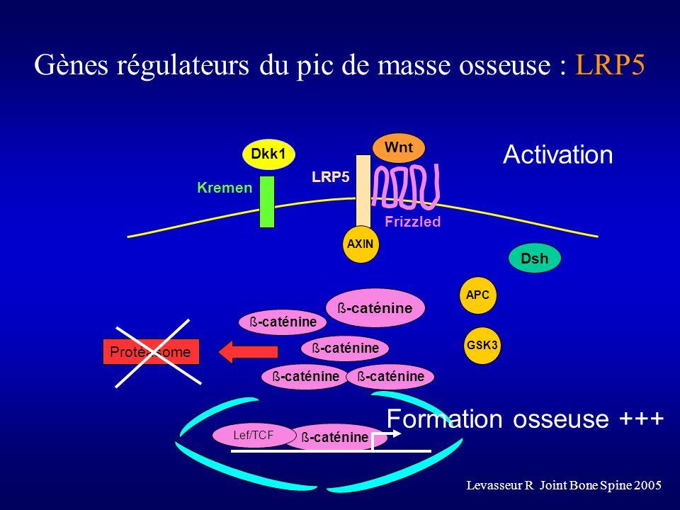 Frizzled Dsh ß-caténine Lef/TCF Protéasome Wnt Dkk1 APCAXINGSK3 Kremen LRP5 ß-caténine Activation Formation osseuse +++ Gènes régulateurs du pic de ma
