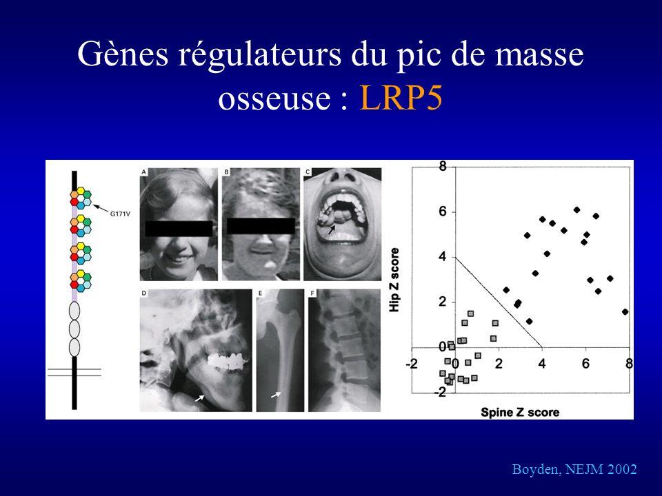 Boyden, NEJM 2002 Gènes régulateurs du pic de masse osseuse : LRP5