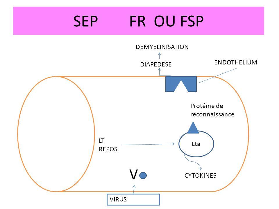 SEPFR OU FSP DEMYELINISATION DIAPEDESE ENDOTHELIUM Protéine de reconnaissance Lta CYTOKINES V VIRUS LT REPOS
