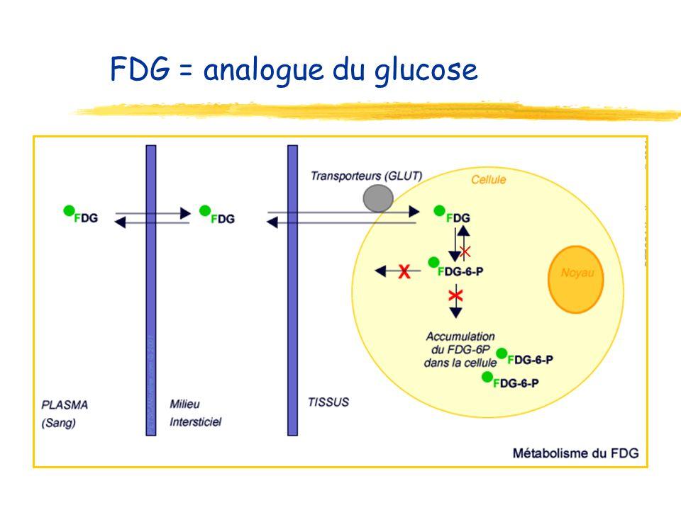 Cancer : consommation de glucose