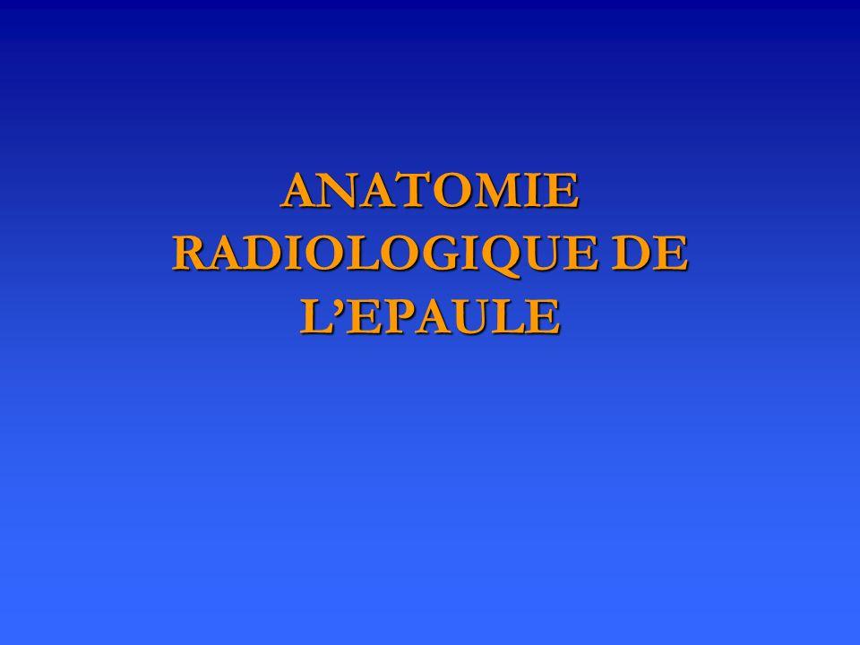 ANATOMIE RADIOLOGIQUE DE LEPAULE
