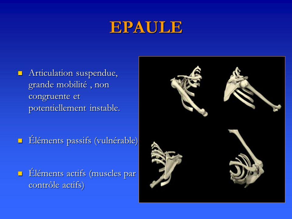 EPAULE Articulation suspendue, grande mobilité, non congruente et potentiellement instable. Articulation suspendue, grande mobilité, non congruente et