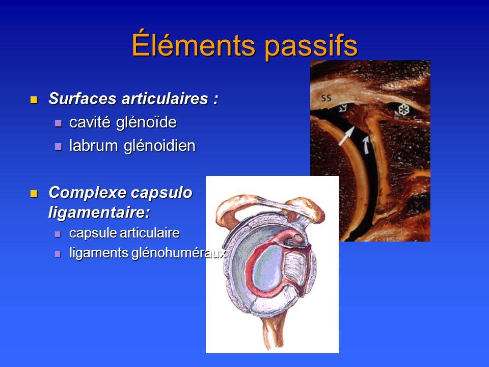 Éléments passifs Surfaces articulaires : Surfaces articulaires : cavité glénoïde cavité glénoïde labrum glénoidien labrum glénoidien Complexe capsulo