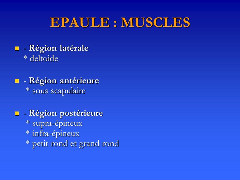 EPAULE : MUSCLES - Région latérale * deltoide - Région latérale * deltoide - Région antérieure * sous scapulaire - Région antérieure * sous scapulaire