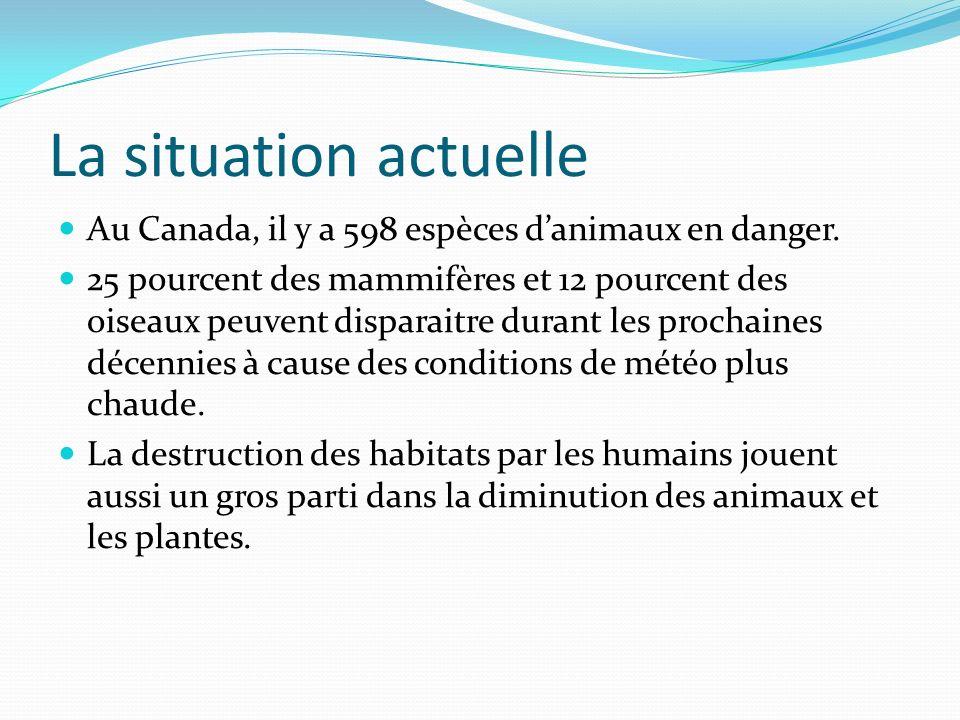La situation actuelle Au Canada, il y a 598 espèces danimaux en danger.