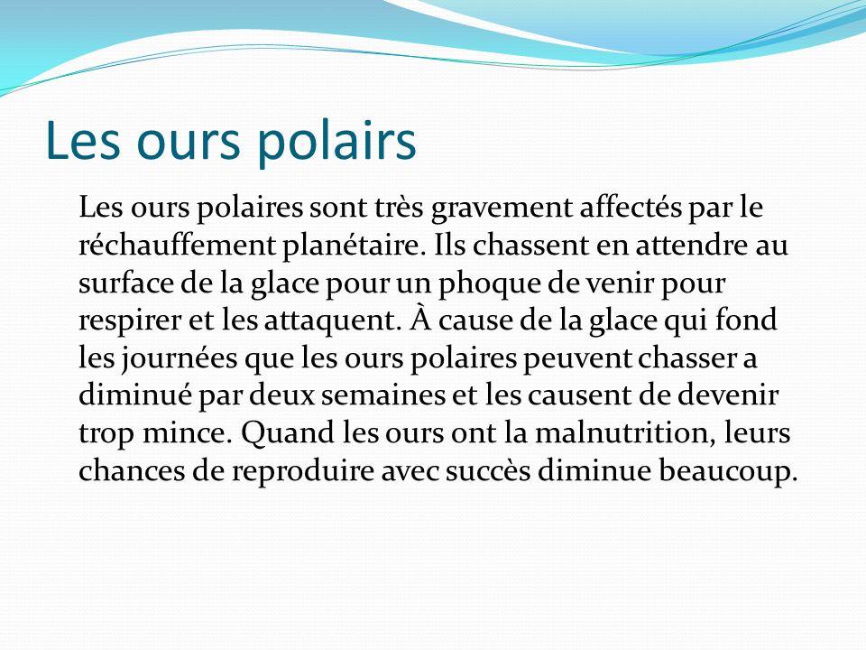 Les ours polairs Les ours polaires sont très gravement affectés par le réchauffement planétaire.