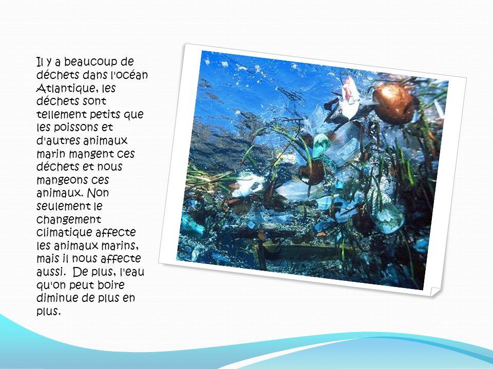 Il y a beaucoup de déchets dans l'océan Atlantique, les déchets sont tellement petits que les poissons et d'autres animaux marin mangent ces déchets e