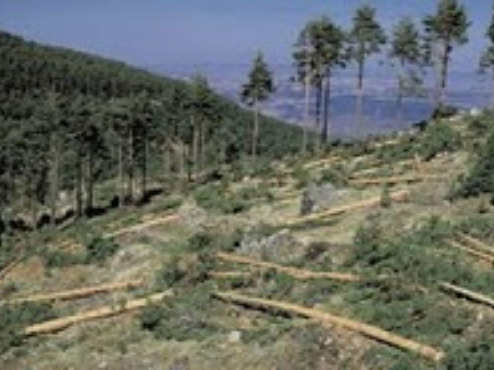 Lenlèvement de nos forêts Cela est une photo du Nouveau-Brunswick.