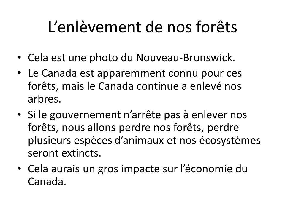 Lenlèvement de nos forêts Cela est une photo du Nouveau-Brunswick. Le Canada est apparemment connu pour ces forêts, mais le Canada continue a enlevé n