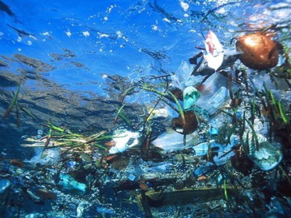 La pollution de nos océans La pollution de nos océans est un gros problèmes au Canada.