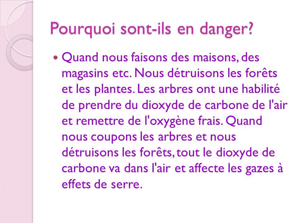 Pourquoi sont-ils en danger? Quand nous faisons des maisons, des magasins etc. Nous détruisons les forêts et les plantes. Les arbres ont une habilité