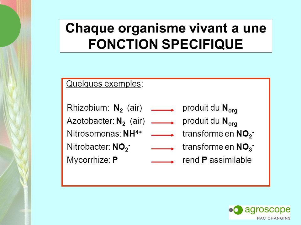 Chaque organisme vivant a une FONCTION SPECIFIQUE Quelques exemples: Rhizobium: N 2 (air) produit du N org Azotobacter: N 2 (air) produit du N org Nit