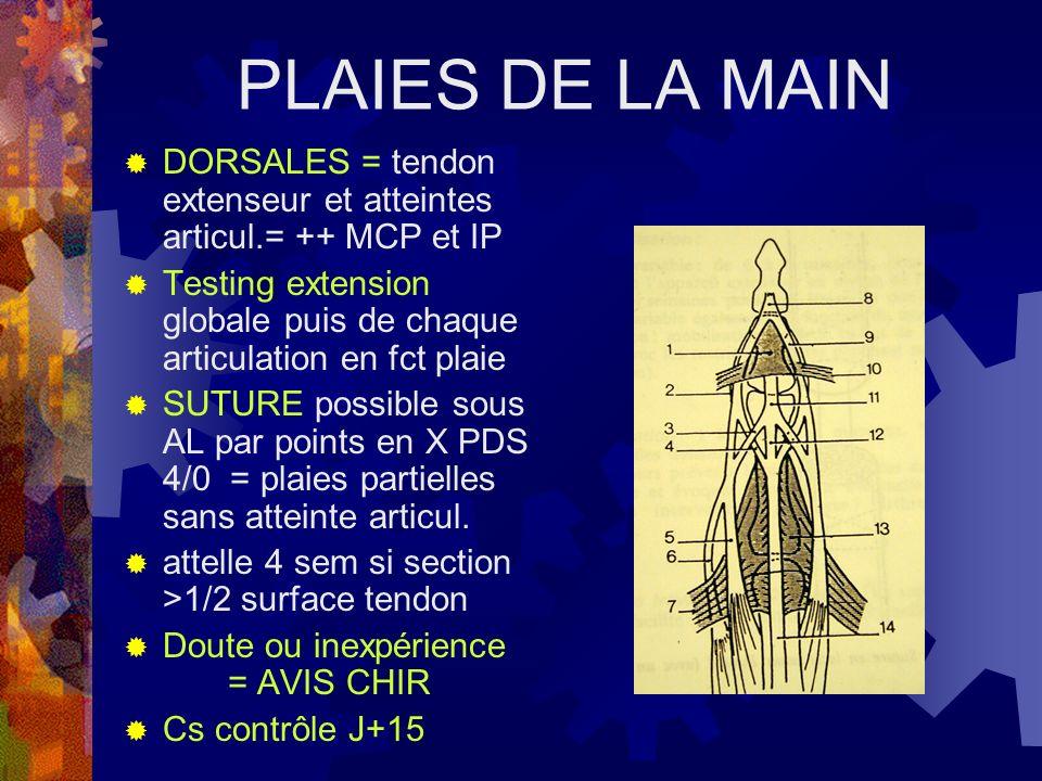 PLAIES DE LA MAIN DORSALES = tendon extenseur et atteintes articul.= ++ MCP et IP Testing extension globale puis de chaque articulation en fct plaie S
