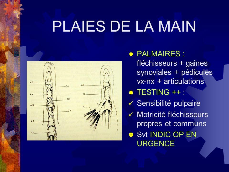 PLAIES DE LA MAIN PALMAIRES : fléchisseurs + gaines synoviales + pédicules vx-nx + articulations TESTING ++ : Sensibilité pulpaire Motricité fléchisse