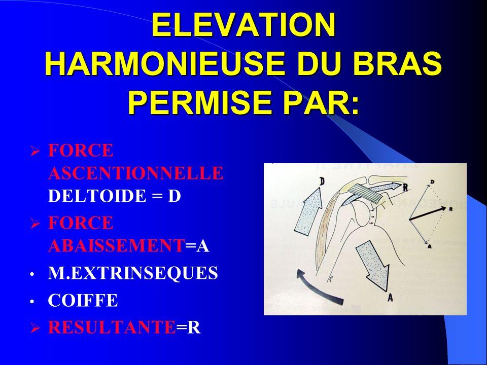 ELEVATION HARMONIEUSE DU BRAS PERMISE PAR: FORCE ASCENTIONNELLE DELTOIDE = D FORCE ABAISSEMENT=A M.EXTRINSEQUES COIFFE RESULTANTE=R