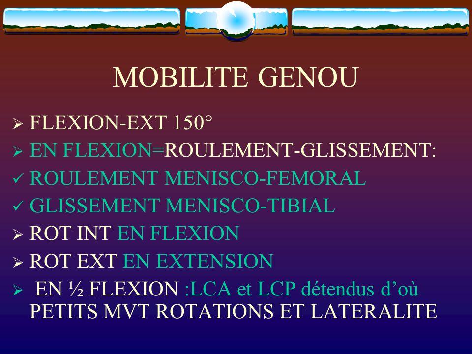 MOBILITE GENOU FLEXION-EXT 150° EN FLEXION=ROULEMENT-GLISSEMENT: ROULEMENT MENISCO-FEMORAL GLISSEMENT MENISCO-TIBIAL ROT INT EN FLEXION ROT EXT EN EXT