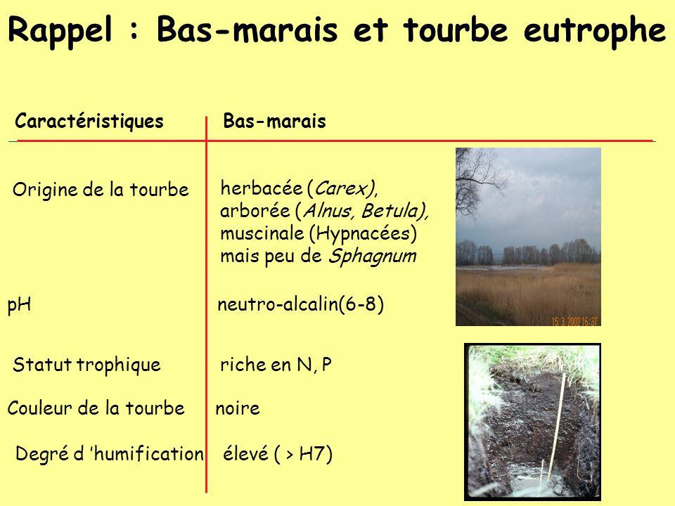 CaractéristiquesBas-marais Statut trophiqueriche en N, P Origine de la tourbe herbacée (Carex), arborée (Alnus, Betula), muscinale (Hypnacées) mais pe