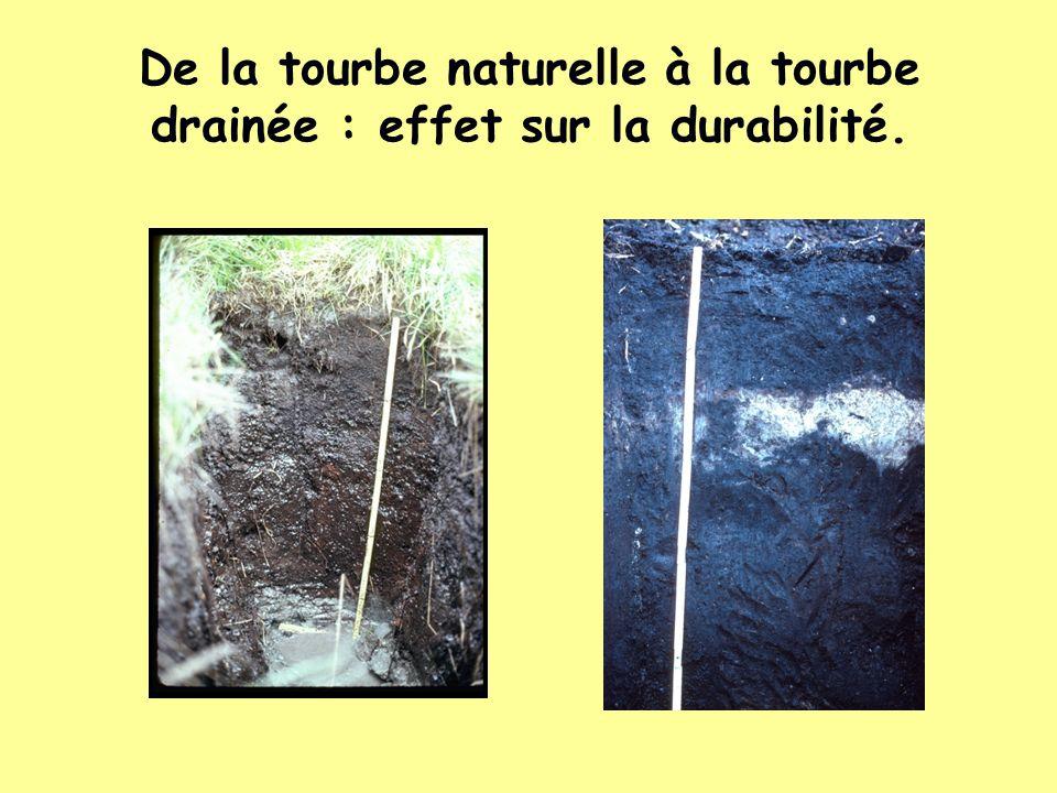 De la tourbe naturelle à la tourbe drainée : effet sur la durabilité.