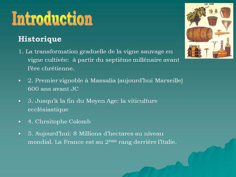 Historique 1. La transformation graduelle de la vigne sauvage en vigne cultivée: à partir du septième millénaire avant lère chrétienne. 2. Premier vig