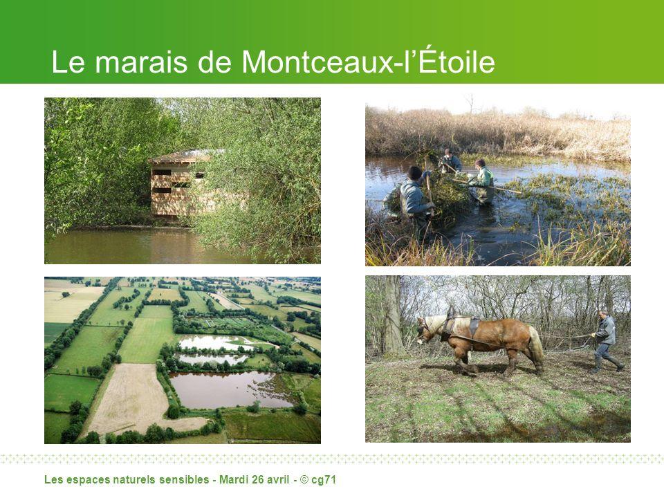 Le marais de Montceaux-lÉtoile Les espaces naturels sensibles - Mardi 26 avril - © cg71