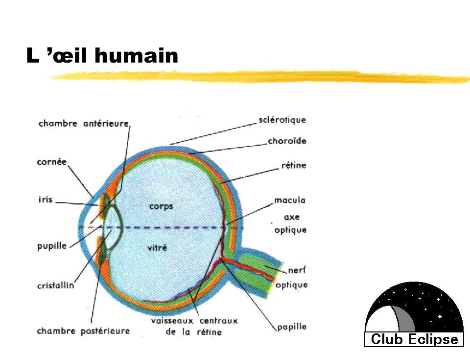 L œil humain