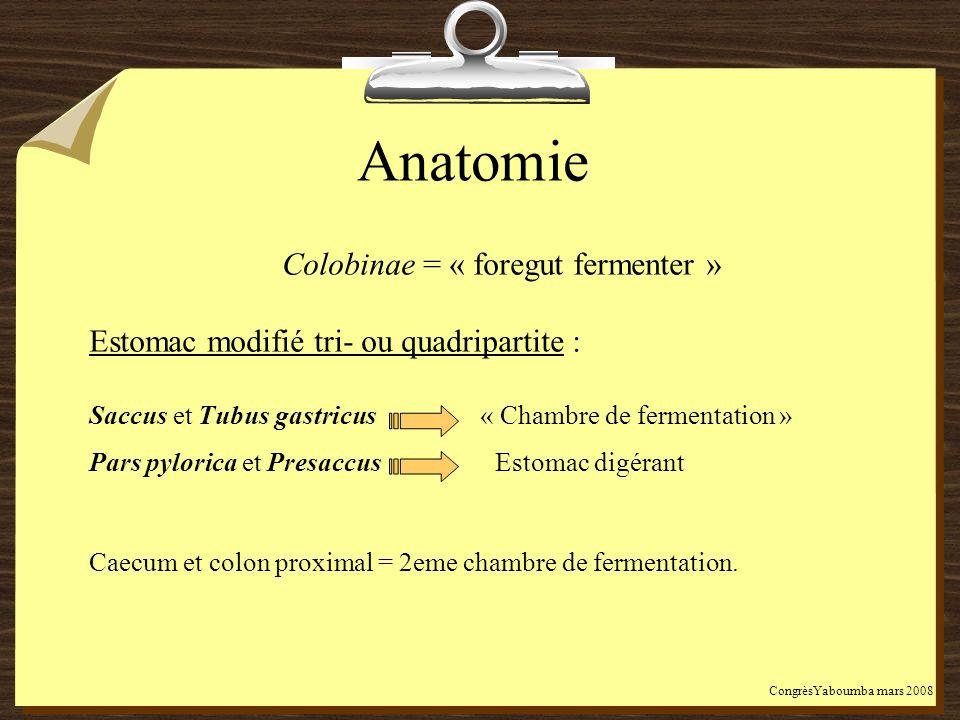 Anatomie Colobinae = « foregut fermenter » Estomac modifié tri- ou quadripartite : Saccus et Tubus gastricus « Chambre de fermentation » Pars pylorica