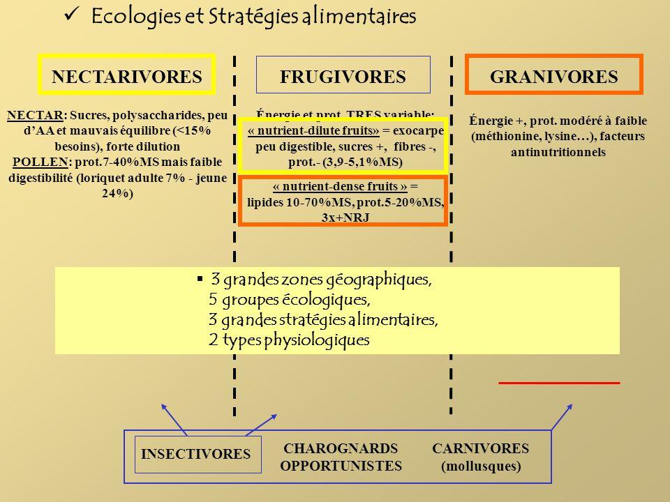 NECTARIVORES INSECTIVORES FRUGIVORES CHAROGNARDS OPPORTUNISTES GRANIVORES CARNIVORES (mollusques) NECTAR: Sucres, polysaccharides, peu dAA et mauvais
