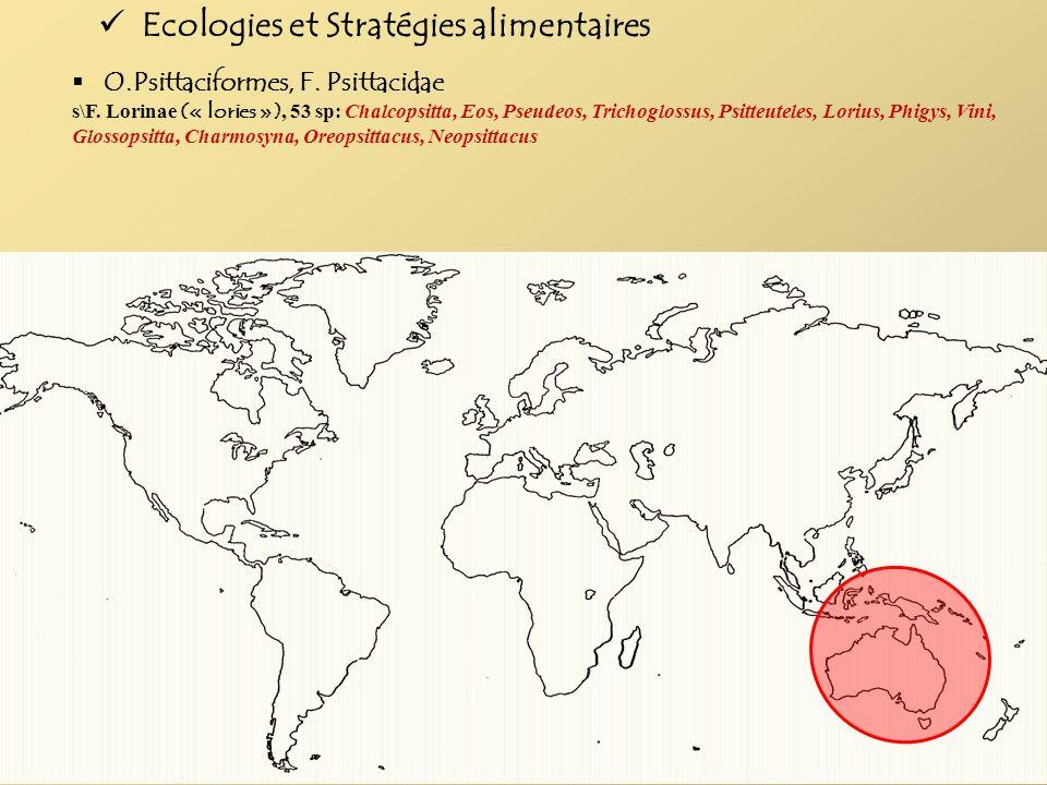 Ecologies et Stratégies alimentaires O.Psittaciformes, F. Psittacidae s\F. Lorinae (« lories »), 53 sp: Chalcopsitta, Eos, Pseudeos, Trichoglossus, Ps