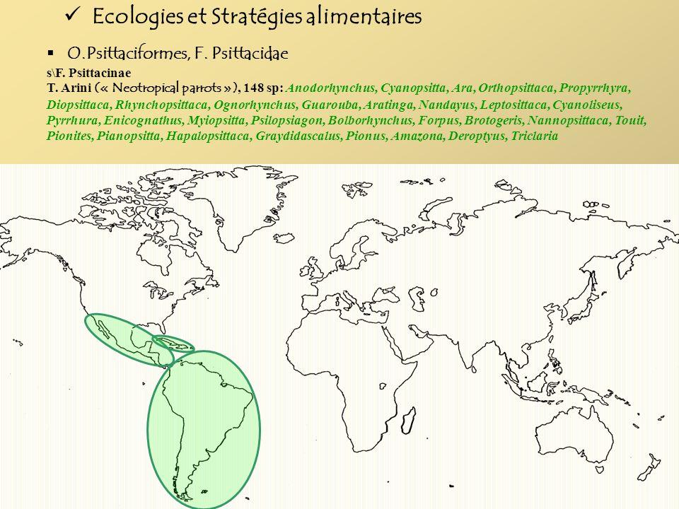 O.Psittaciformes, F. Psittacidae s\F. Psittacinae T. Arini (« Neotropical parrots »), 148 sp: Anodorhynchus, Cyanopsitta, Ara, Orthopsittaca, Propyrrh