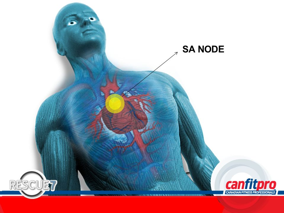 CPR Course Level 1 SA NODE