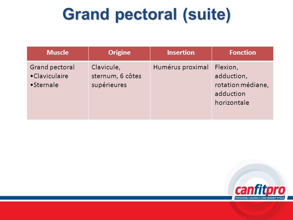 Grand pectoral (suite) MuscleOrigineInsertionFonction Grand pectoral Claviculaire Sternale Clavicule, sternum, 6 côtes supérieures Humérus proximalFle