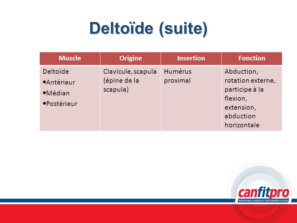 Deltoïde (suite) MuscleOrigineInsertionFonction Deltoïde Antérieur Médian Postérieur Clavicule, scapula (épine de la scapula) Humérus proximal Abducti