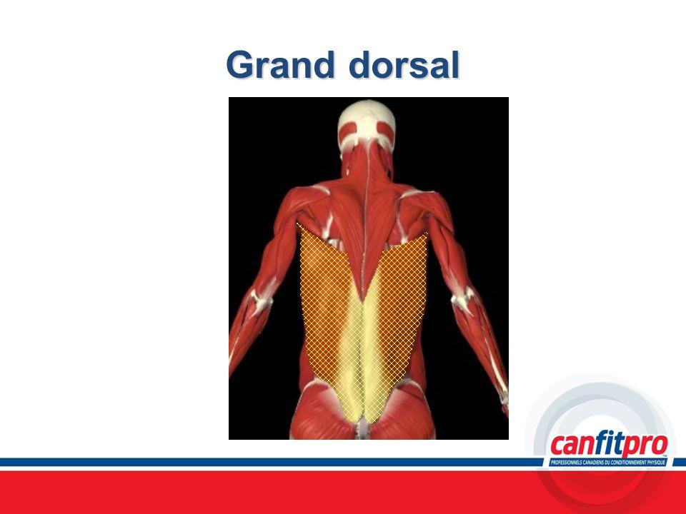 Grand dorsal