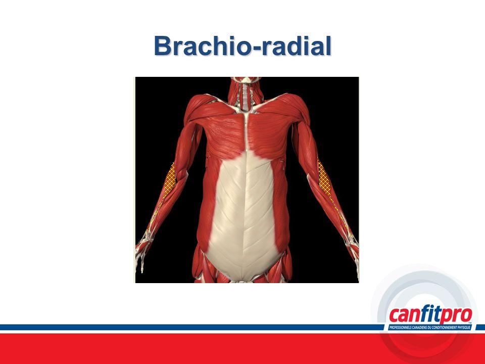 Brachio-radial