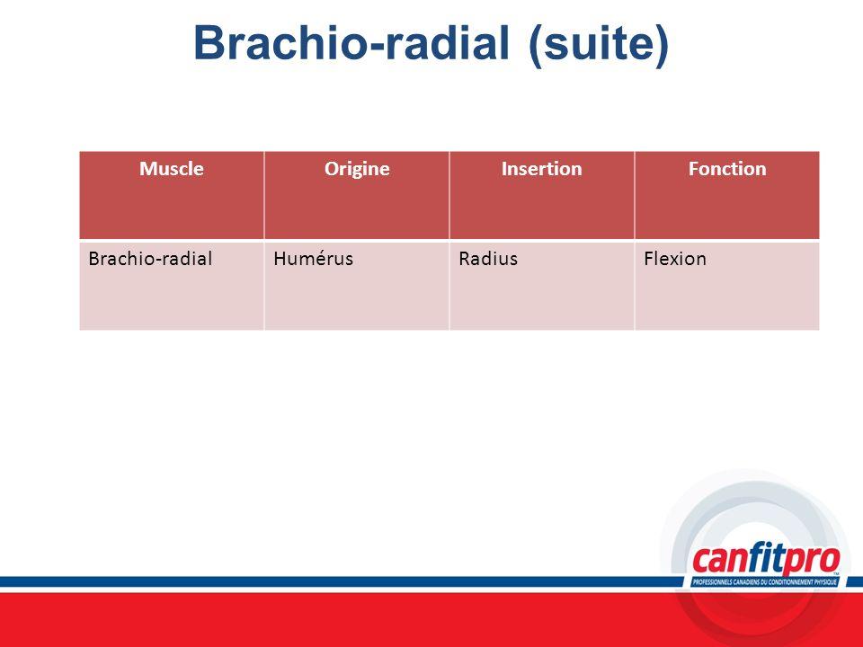 Brachio-radial (suite) MuscleOrigineInsertionFonction Brachio-radialHumérusRadiusFlexion