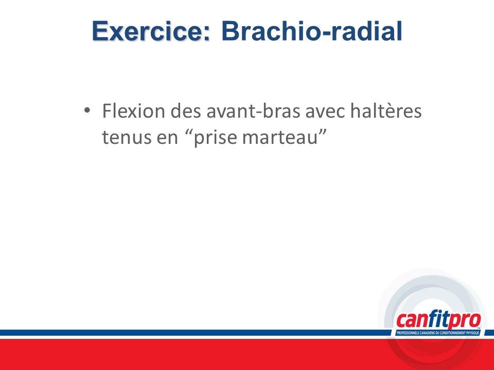 Exercice: Exercice: Brachio-radial Flexion des avant-bras avec haltères tenus en prise marteau