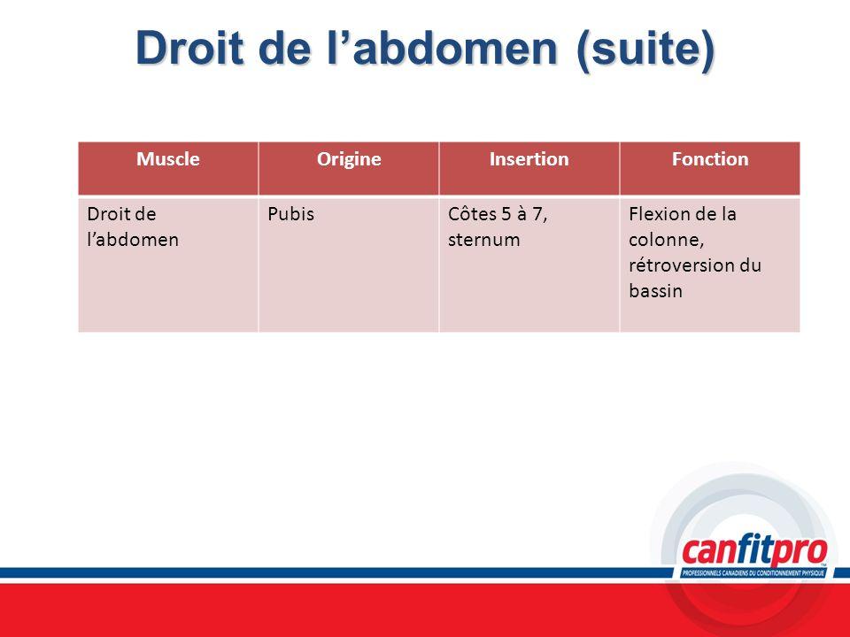Droit de labdomen (suite) MuscleOrigineInsertionFonction Droit de labdomen PubisCôtes 5 à 7, sternum Flexion de la colonne, rétroversion du bassin