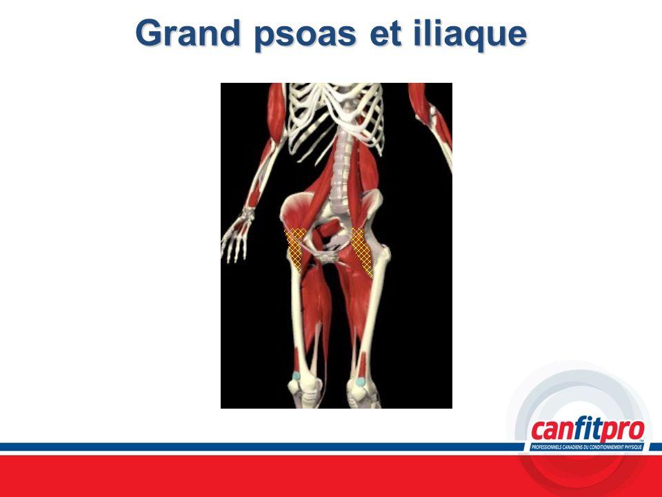 Grand psoas et iliaque