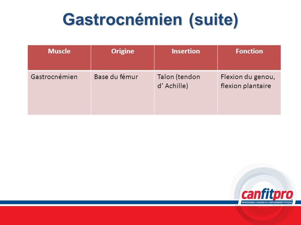 Gastrocnémien (suite) MuscleOrigineInsertionFonction GastrocnémienBase du fémurTalon (tendon d Achille) Flexion du genou, flexion plantaire