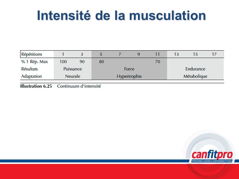 Intensité de la musculation